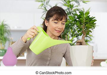 female florist watering a bonsai tree