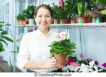 Female florist with auricula (Primula) at flower store