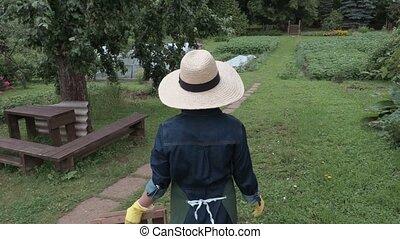 Female gardener bringing wooden box and checking potatoes plants