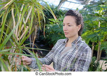 female gardener examining plants at greenhouse