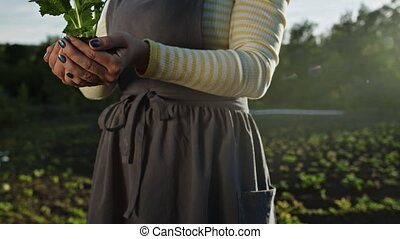 Female gardener holding sprouted mint plant in soil. Agriculture, caring for mother earth, environmental conservation, harvest concept. Dolly, close-up shot with sunshine