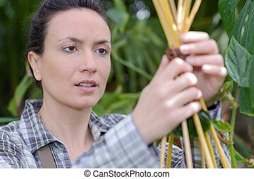 female gardener inspecting plants in greenhouse