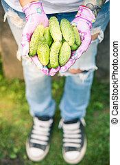 Female gardener or farmer holding fresh cucumbers in hands