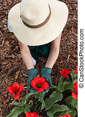 Female gardener planting red flowers