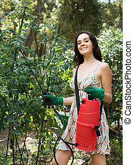 Female gardener spraying tomato plant