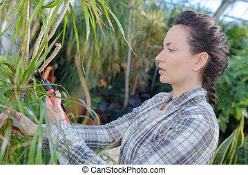 female gardener trimming plants
