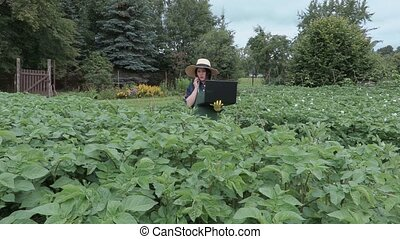 Female gardener with phone and laptop near potatoes plants