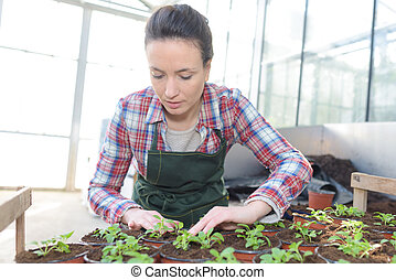 female gardener with small plants
