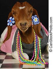 female goat - goat wearing female clothing and jewelry on...