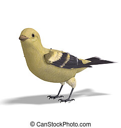 Female Goldfinch.  3D rendering with clipping path and shadow over white