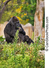 Female gorilla with kid