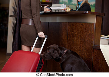 female guest with dog at hotel reception