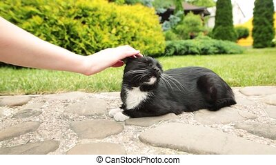 Female hand closeup petting homeless cat that resting on...