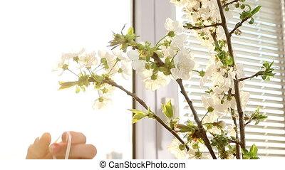 Female hand hang easter egg on cherry branch.