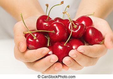 Female hand harvesting cherry