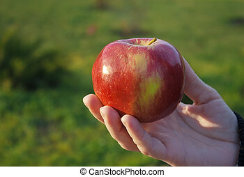 female hand holding an apple