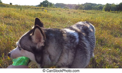 Female hand holding in hand a plastic bottle while siberian...