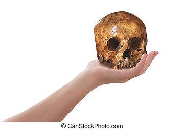 Female hand holding skull isolated on white. Cogitation or...