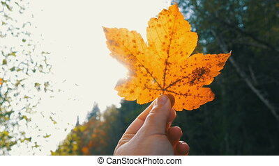 Female hand holds autumn yellow leaf on a background of trees and sun. Symbol of joy and carefree life, Autumn backdrop