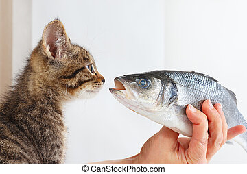 Female hand offers a pretty kitten labrax fish - Female hand...