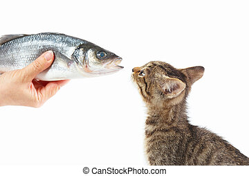 Female hand offers a small kitten a sea bass fish on white...