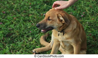 Female hand patting dog head, dog runs, HD