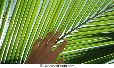 Female hand touching palm leaf and the sun. Girl enjoying...