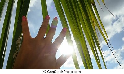 Female hand touching palm leaf and the sun. Woman enjoying bright tropical sun with lens flare effects in slow motion against blue sky background with clouds. Vacation concept.   hd
