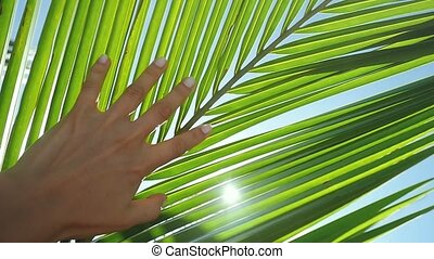 Female hand touching palm leaf and the sun. Woman enjoying...