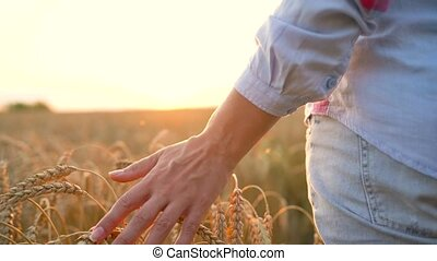 Female hand touching wheat on the field in a sunset light