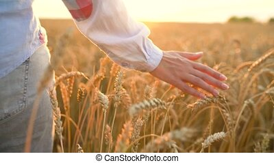 Female hand touching wheat on the field in a sunset light. Slow motion
