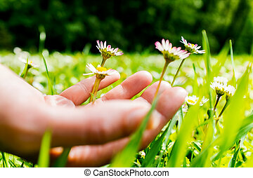 Female hand touching wild flowers.