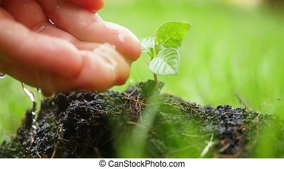 Female hand watering young plant over blurred green background in slow motion.