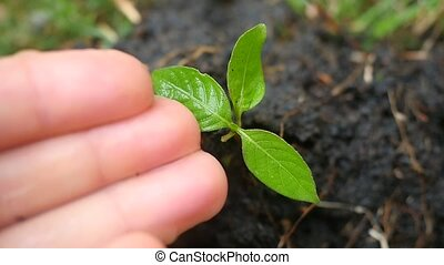 Female hand watering young plant over blurred green background. slow motion.