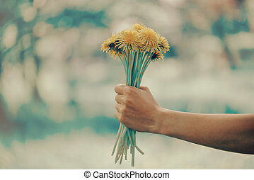 Female hand with bouquet of dandelions - Woman holding...