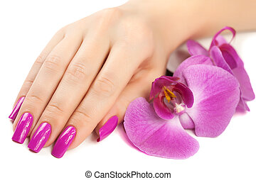 female hand with orchid flower. isolated