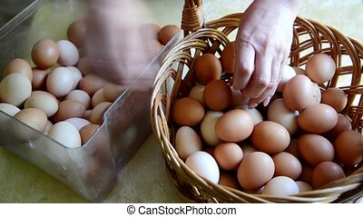 Female hands folded chicken eggs in basket - Female hands...