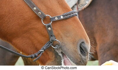 Female hands gently stroke the face of a brown chewing horse