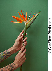 Female hands holding a small bouquet of strelitzia on a green background