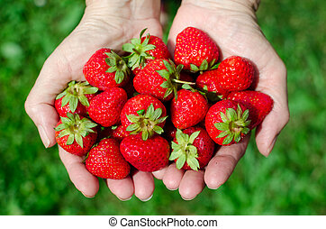Female hands holding fresh strawberries