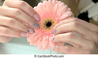 Female hands holding gerbera flower. Beautiful female...