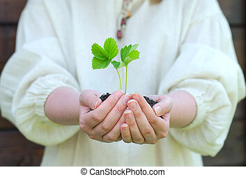Female hands holding soil with green sprout