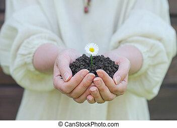 Female hands holding soil with white flower