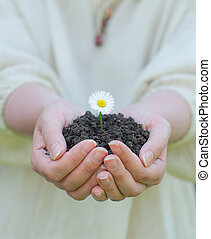 Female hands holding soil with white flower