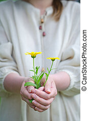 Female hands holding soil with yellow flower