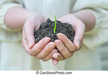 Female hands holding solid with green sprout