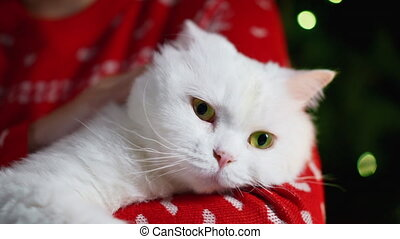 Female hands stroking with love her fluffy white cat near Christmas glowing tree. Woman with lovely pet, New Year animals concept. High quality 4k footage