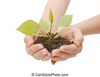 Female hands with a plant  isolated
