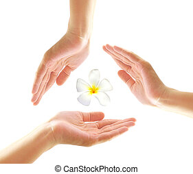 Female hands with frangipani in spa concept