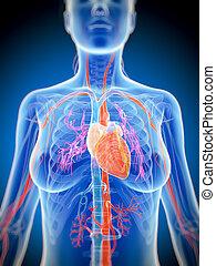 Female heart - 3d rendered illustration of the female heart